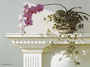 Mantelpiece Orchid by Zhen-Huan Lu