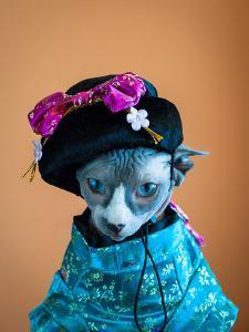 Geisha Cat by zinchik