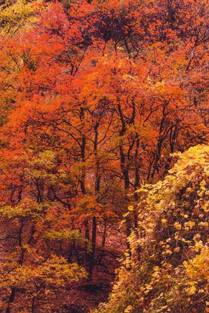 https://imgc.artprintimages.com/img/print/zion-autymn-color-detail-canyon-fall-magic-southern-utah_u-l-q1dsdtk0.jpg?p=0