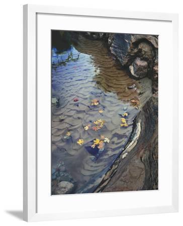 Zion Creek 1-Robert Hansen-Framed Premium Photographic Print