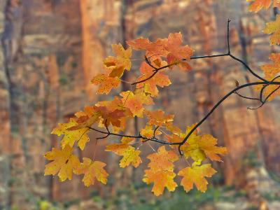 Zion National Park, Utah, USA-Cathy & Gordon Illg-Photographic Print