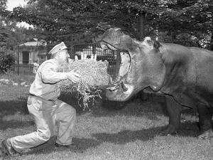Zookeeper Giving Hippo Bundle of Hay