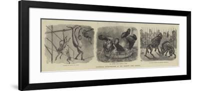Zoological Eccentricities at the Regent's Park Gardens--Framed Giclee Print