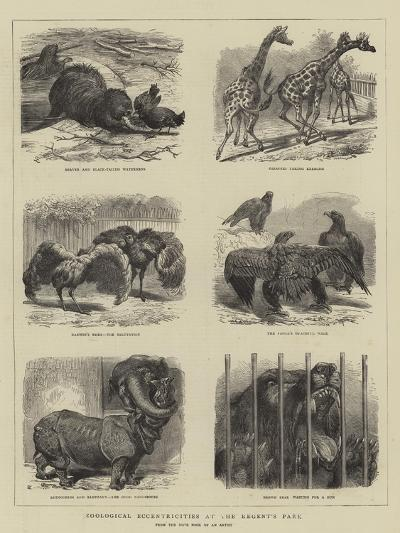 Zoological Eccentricities at the Regent's Park--Giclee Print