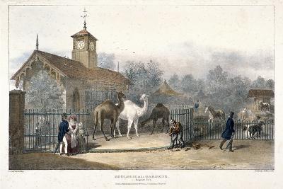 Zoological Gardens, Regent's Park, London, 1835-Charles Joseph Hullmandel-Giclee Print