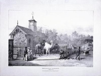 Zoological Gardens, Regent's Park, Marylebone, London, 1835-George Scharf-Giclee Print