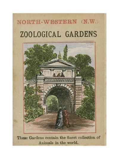 Zoological Gardens--Giclee Print