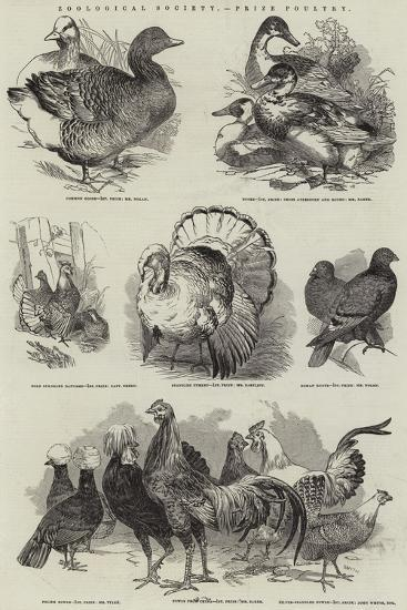 Zoological Society, Prize Poultry--Giclee Print