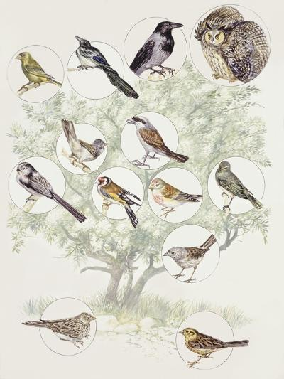 Zoology: Birds, Different Examples--Giclee Print