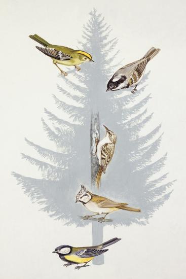 Zoology: Birds--Giclee Print
