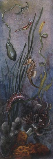 Zoology: Fishes: Different Examples and Sea Floor--Giclee Print