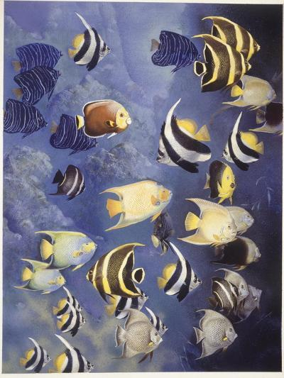 Zoology: Fishes: Different Examples--Giclee Print