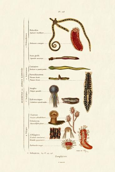 Zoophytes, 1833-39--Giclee Print