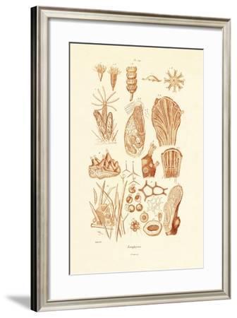 Zoophytes, 1833-39--Framed Giclee Print