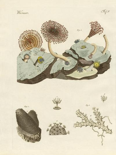 Zoophytes and Animal Plants--Giclee Print