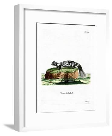 Zorilla--Framed Giclee Print