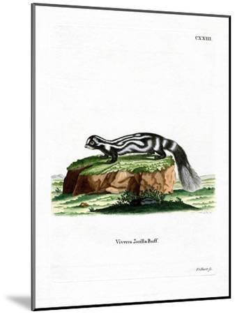 Zorilla--Mounted Giclee Print